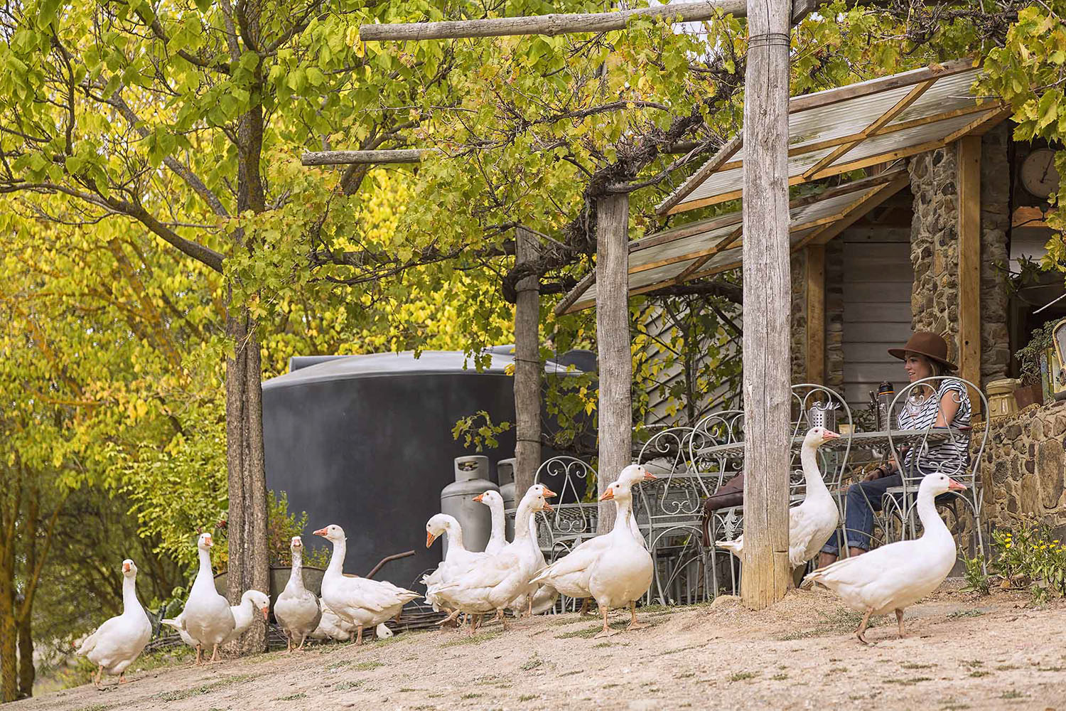 Watching the geese at play at Cafe La Trattoria inside the Lavandula Swiss Italian Farm