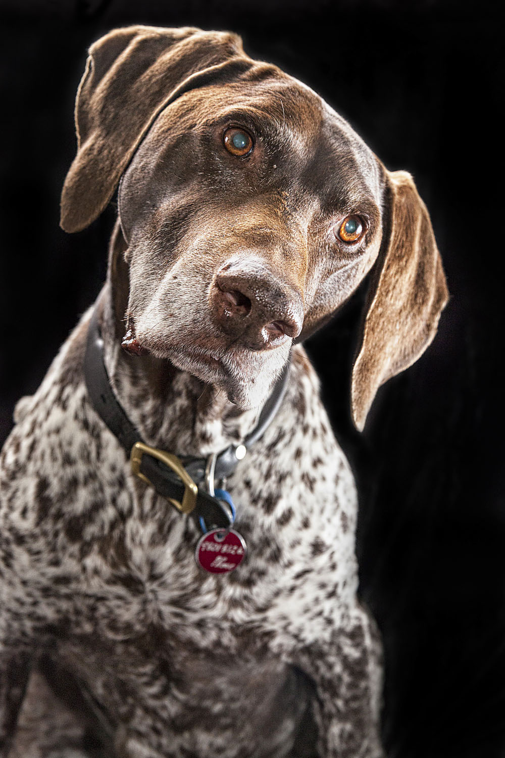 Rocky, the German Shorthaired Pointer