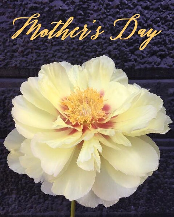 🌷Mother's Day 🌸 is just around the corner; pre-order blooms for the mamas in your life at helloflowersshop.com/shop. (Please note: We are not providing delivery services this year; in-store pick up only.) 💐