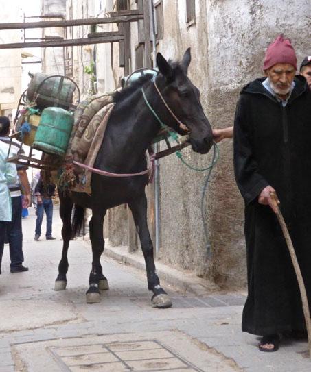 donkey_fes_souk.jpg