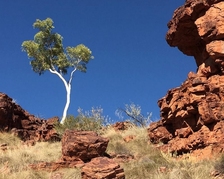ART EXPEDITION IN OUTBACK    AUSTRALIA WITH ARTIST IDRIS MURPHY (MAY 25 - 31, 2020)     Eastern MacDonnell Ranges, NT   Experience the natural wonders of outback Australia with artist Idris Murphy, on this 7 day painting adventure in remote Central Australia.    Read More