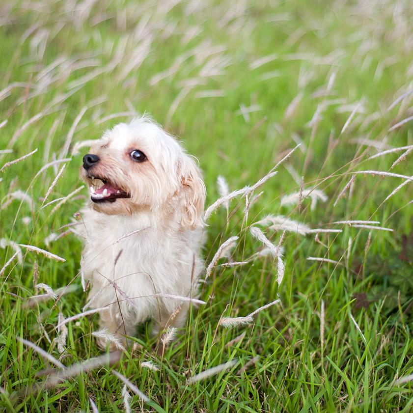 family-photo-pet-dog-photography-07