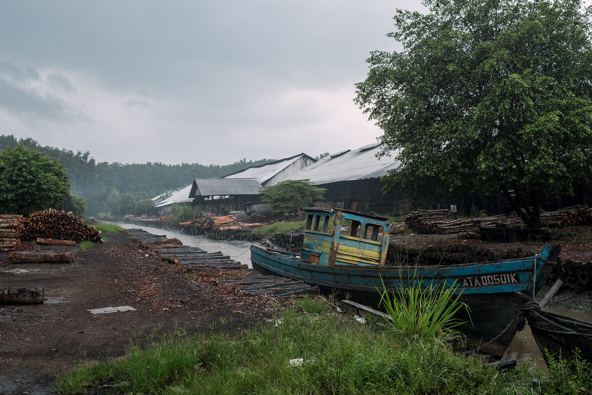 These boats would transport the logged mangrove trees from the forest to the dock for unloading.
