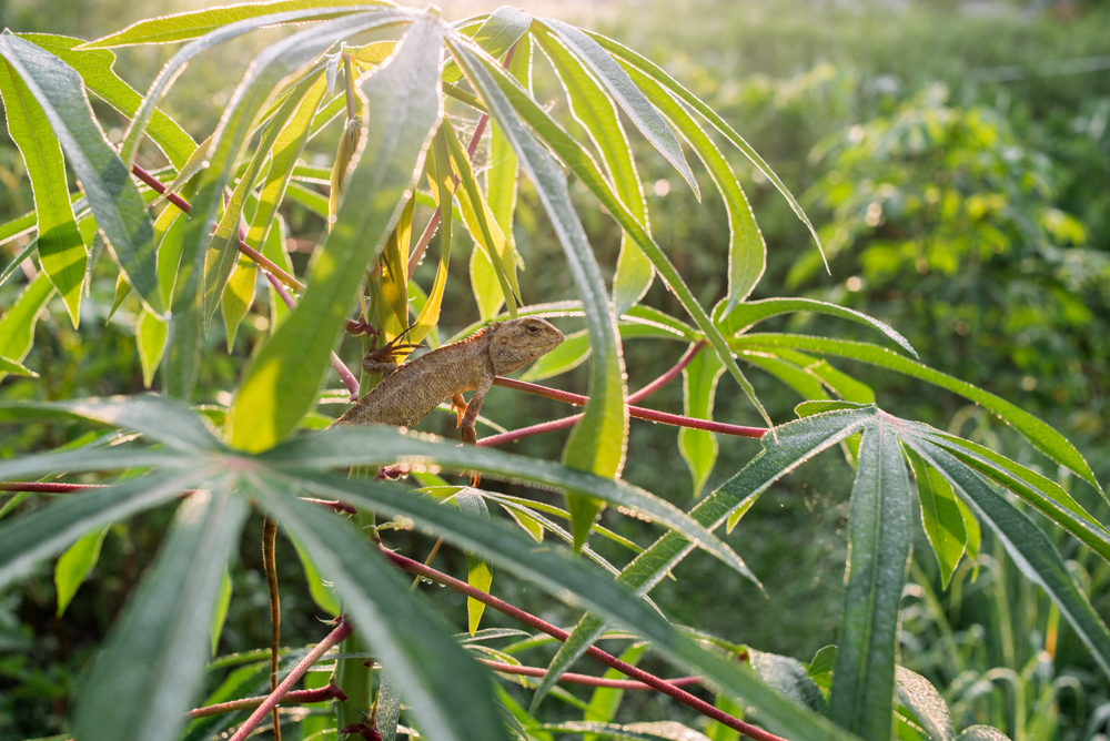 kulai_durian_guesthouse_06