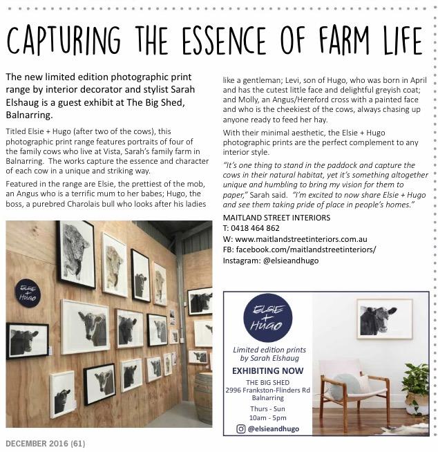 Maitland Street Interiors, Sarah Elshaug, Elsie + Hugo, Limited Edition Art, Cow Prints, Mornington Peninsula Magazine, Interior Stylist Melbourne