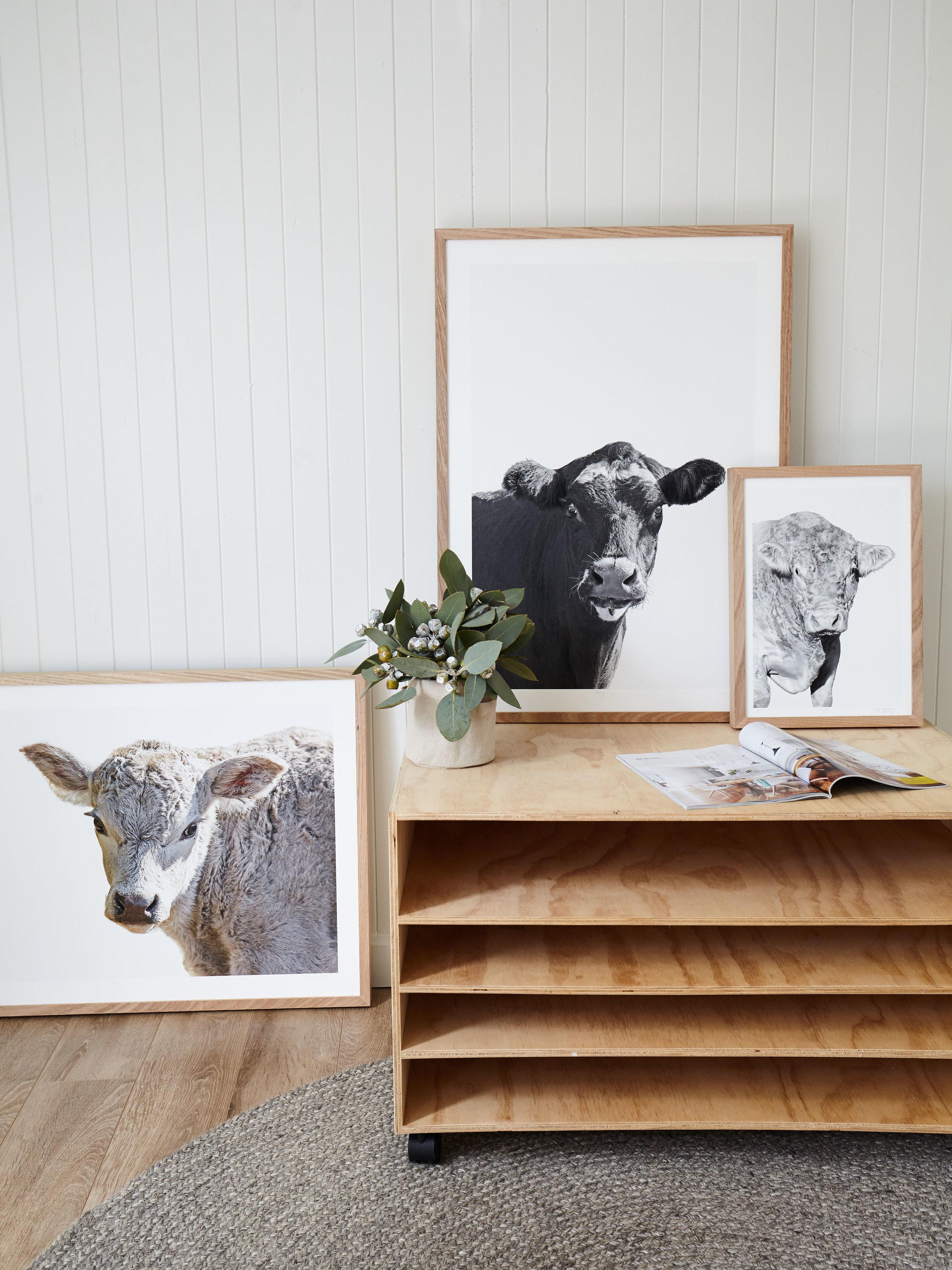 Maitland Street Interiors, Sarah Elshaug, Interior Stylist Melbourne, Elsie + Hugo, Limited Edition Artwork, Cow Prints
