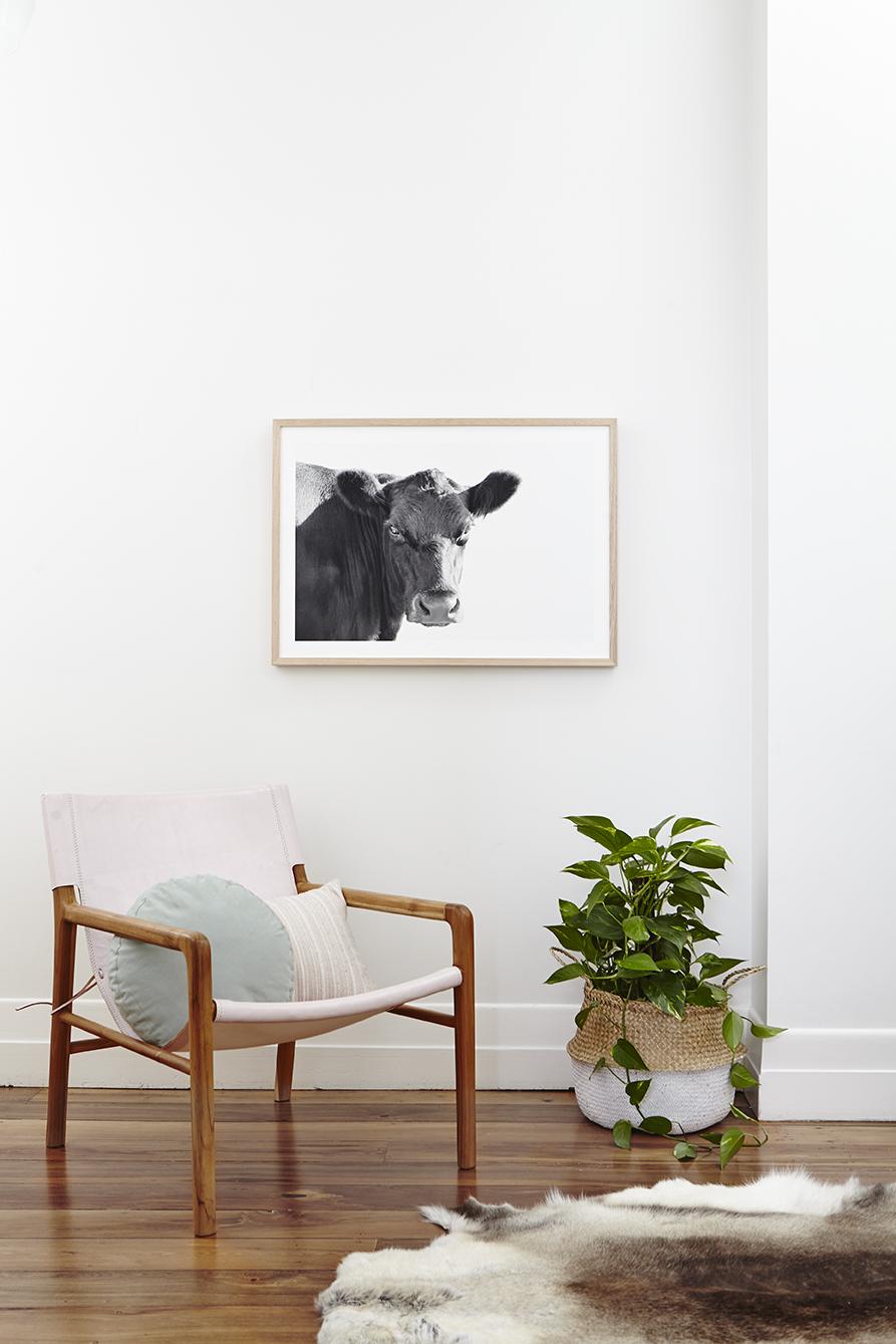 Maitland Street Interiors, Sarah Elshaug, Interior Stylist Melbourne, Elsie + Hugo, Limited Edition Prints, Cow Print