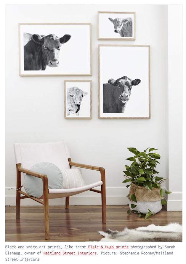 Sarah Elshaug, Elsie + Hugo, Maitland Street Interiors, Animal Art, Interior Stylist