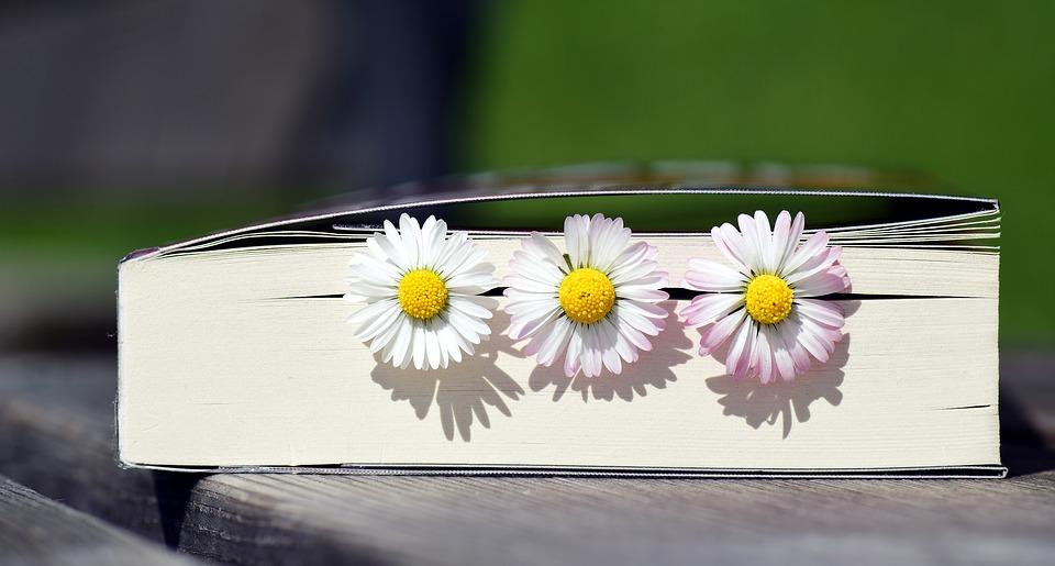 book-2319957_960_720.jpg