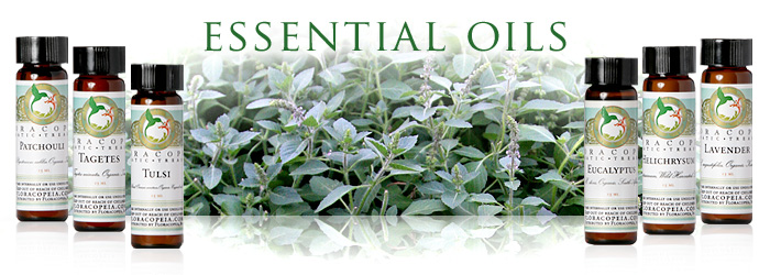 essential-oils-cat-banner.jpg