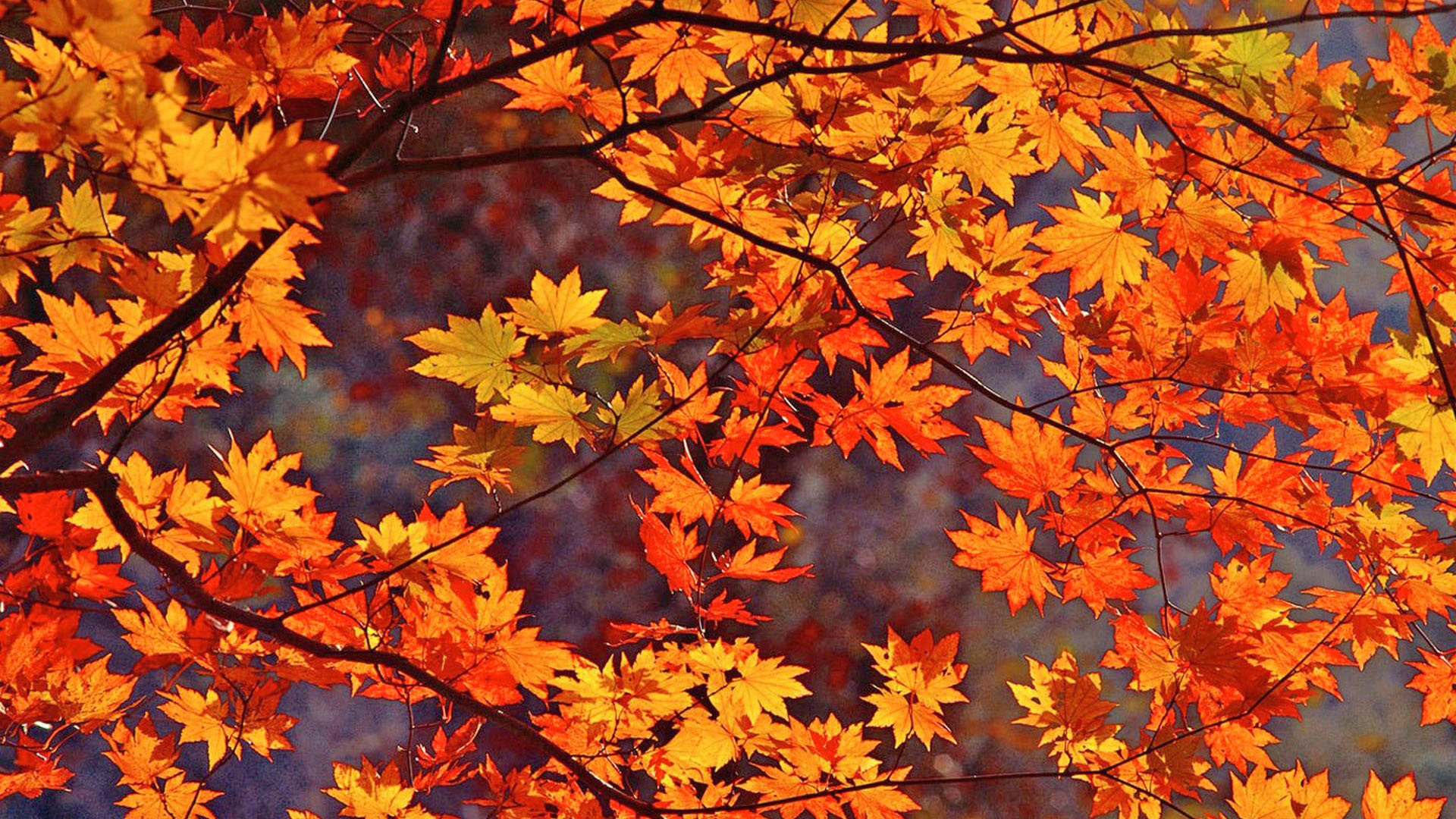 Fall-Leaves-Wallpaper-On-Wallpaper-Hd-8.jpg