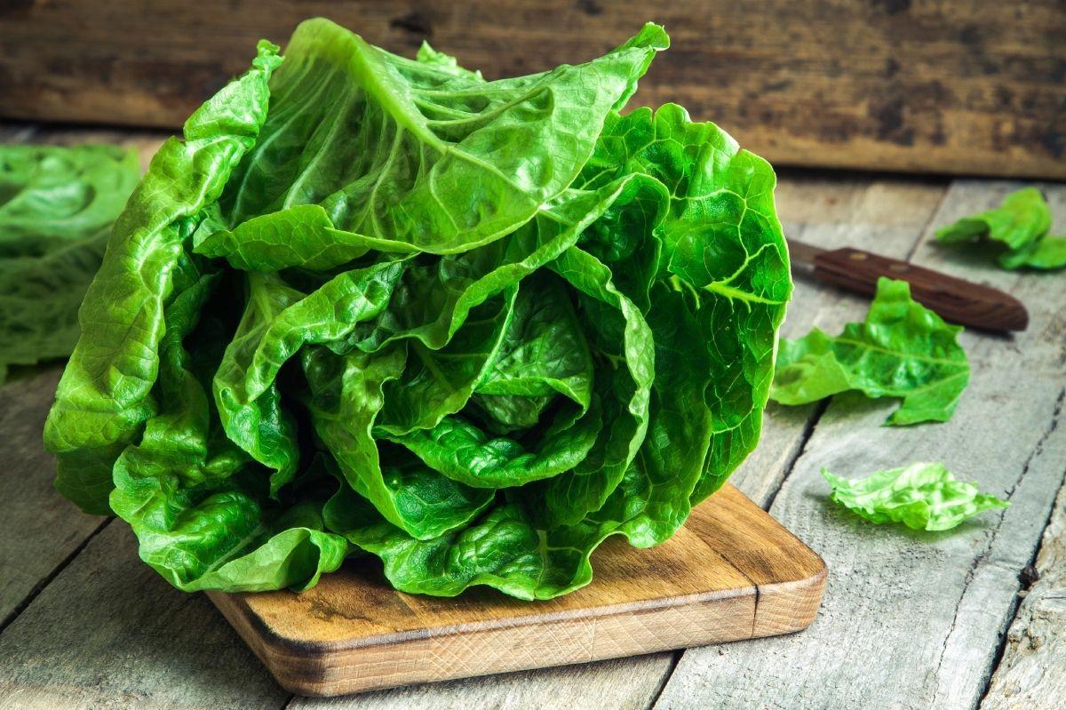 fresh-lettuce-26594-2.jpg