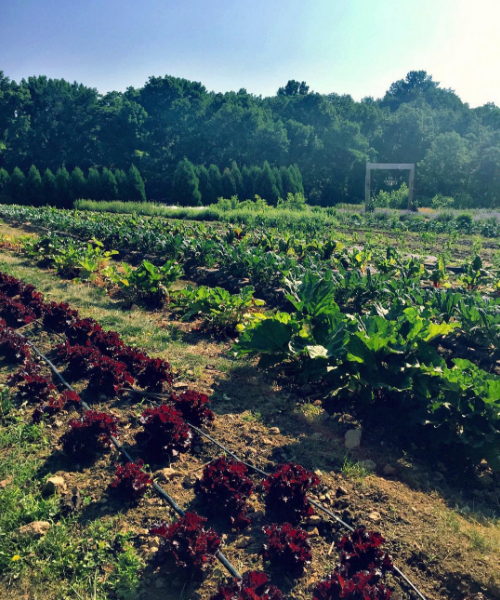 """Campus Rep Kristina conquered her first week working at a farm this week! Kristina always takes it upon herself to """"Eat a Rainbow Everyday!"""""""
