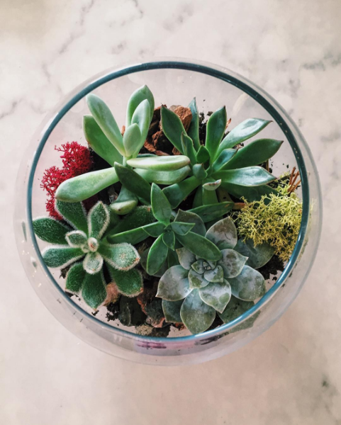 Campus Rep Sara B. shared this stunning photo of succulents!  Succulents, although small, have a major aesthetic appeal we're feeling these days…