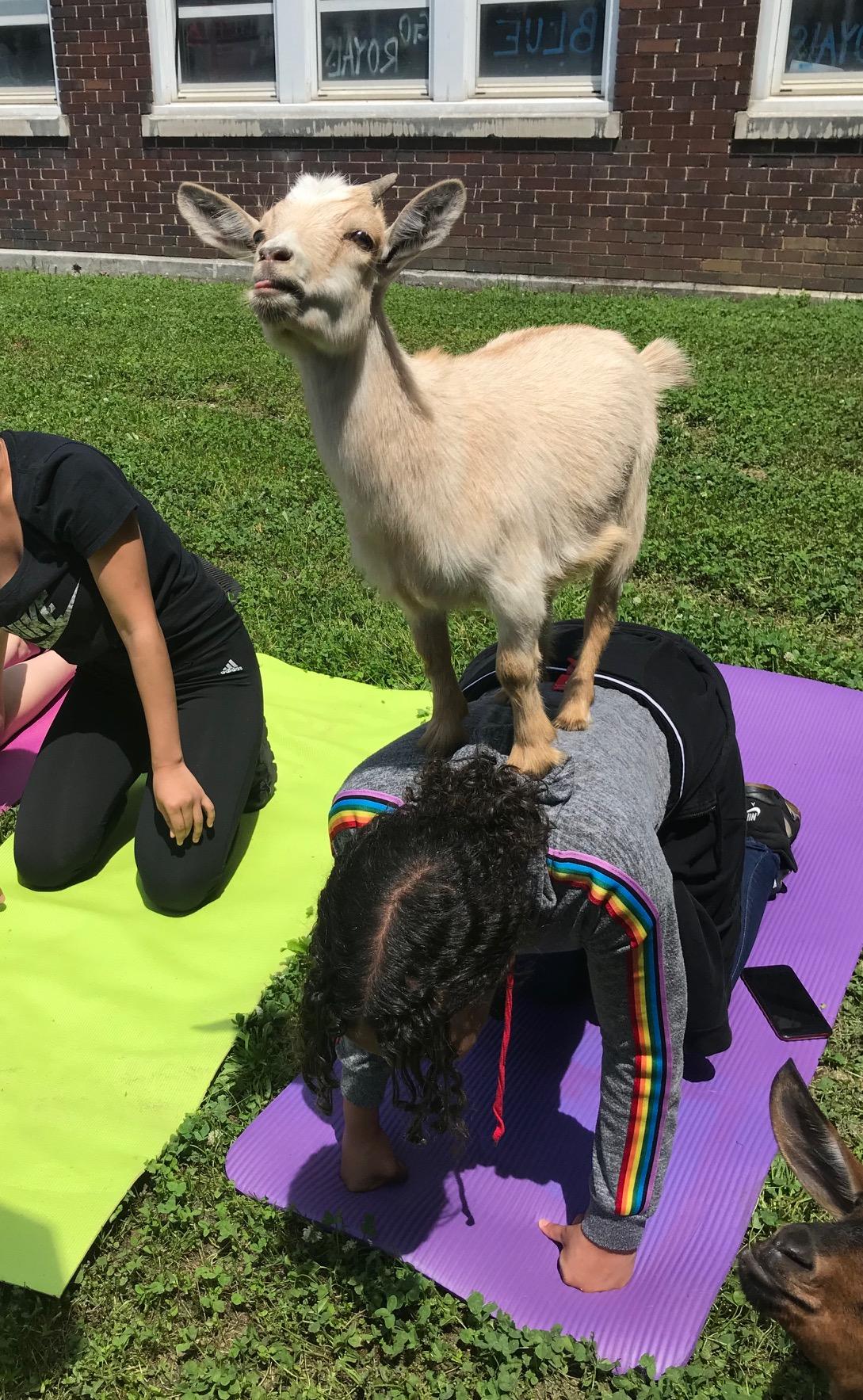 MLK Goat 2.jpg
