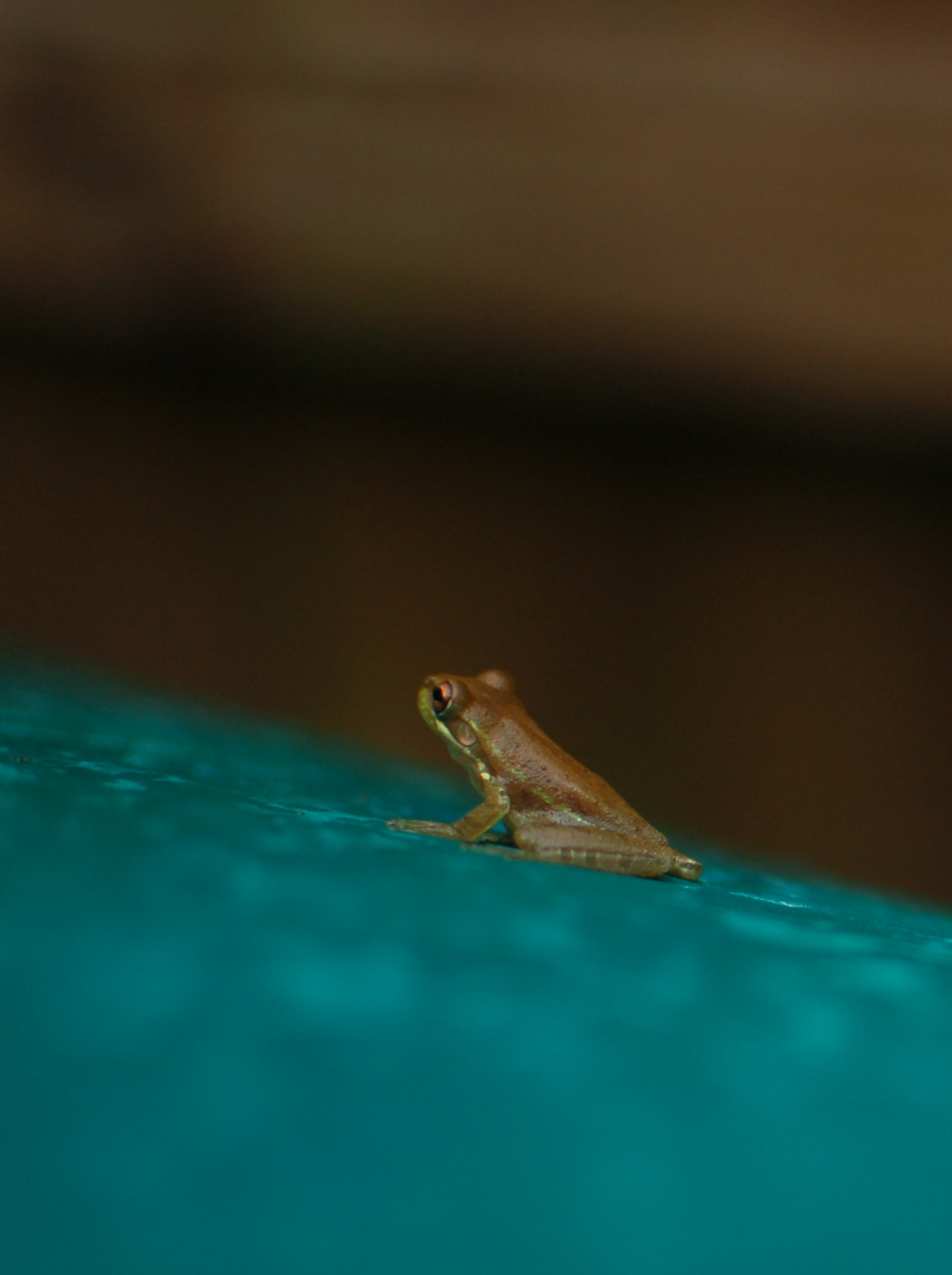 i 4 - compost - a lone frog - photos-5852.jpg
