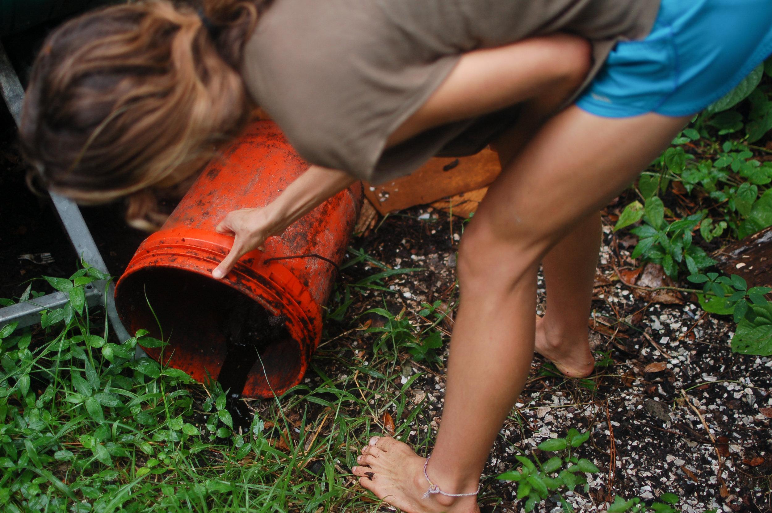 i 4 - compost - allegra nolan - photos-5825.jpg
