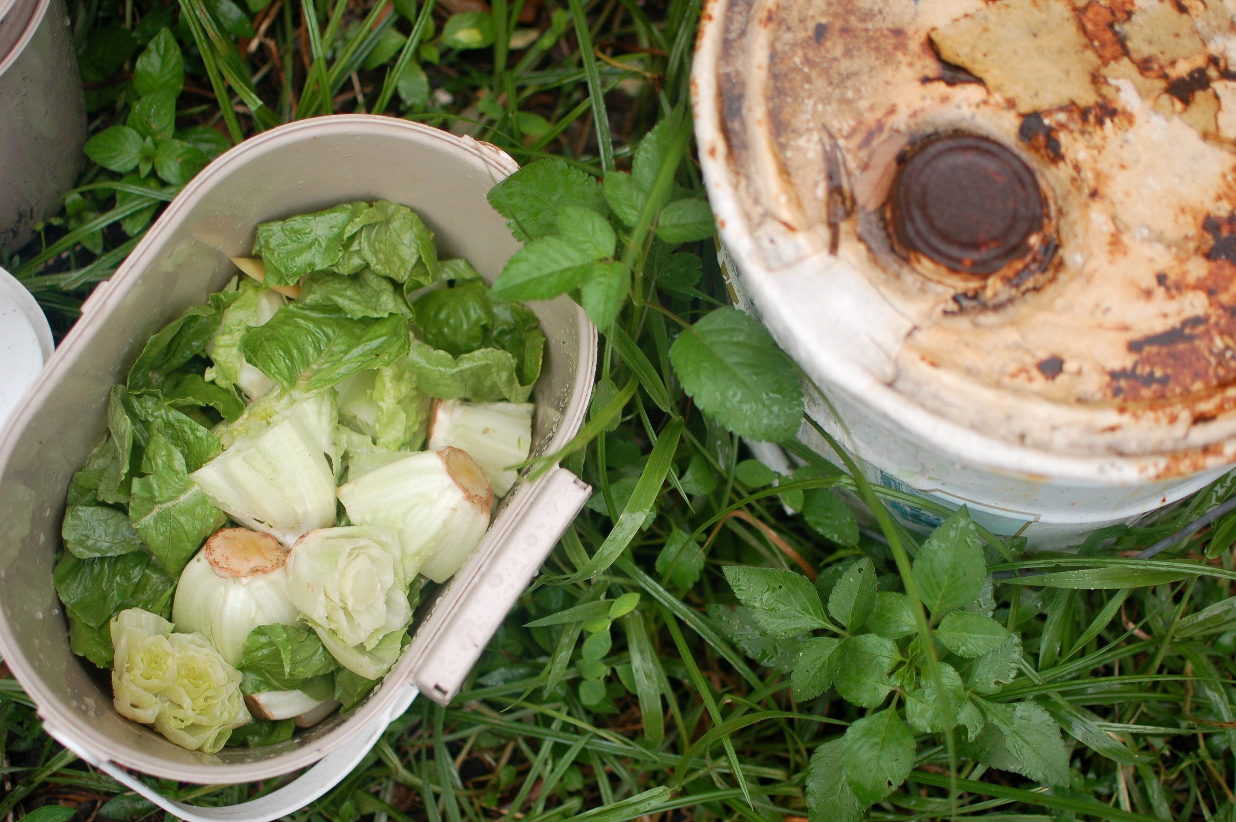 i 4 - compost - photos-5839.jpg