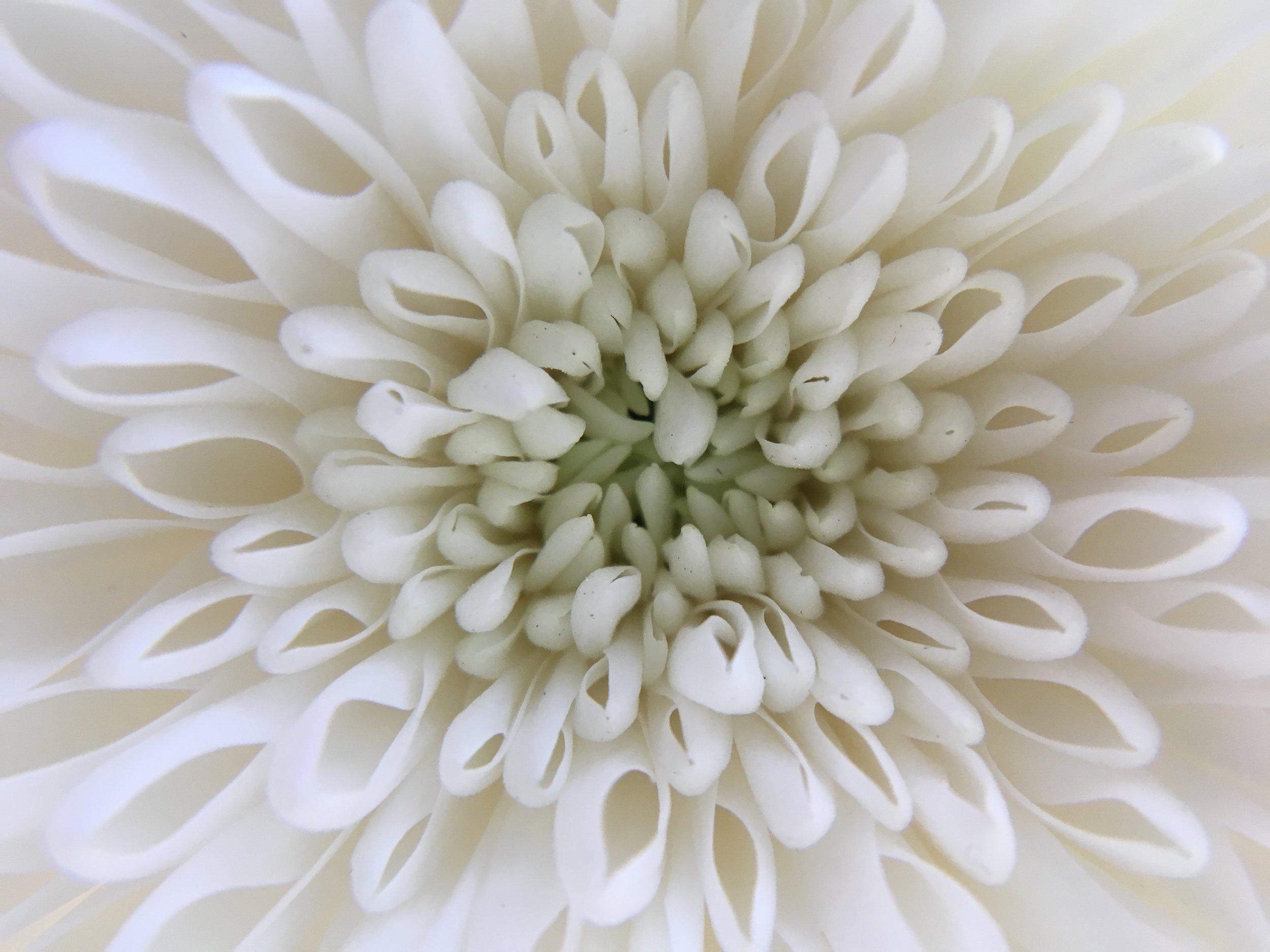 gil flowers 1.JPG