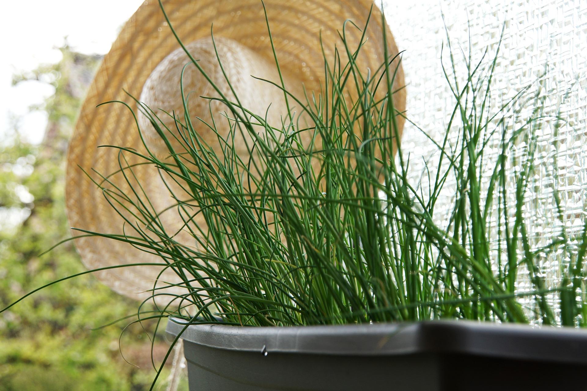 Indoor Herb Garden 1.jpg