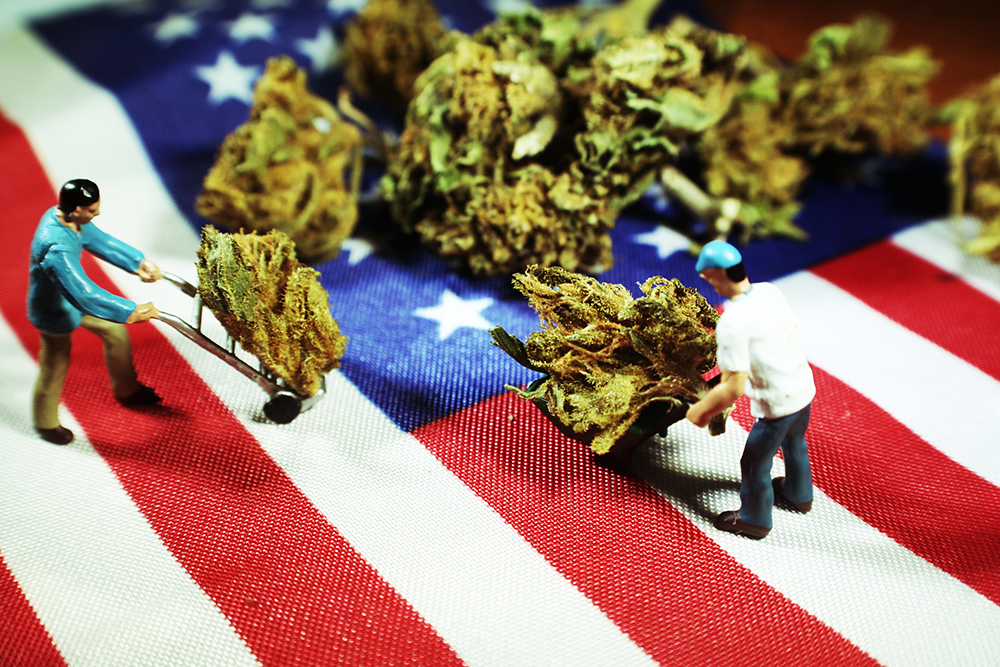 Cannabis image.jpg