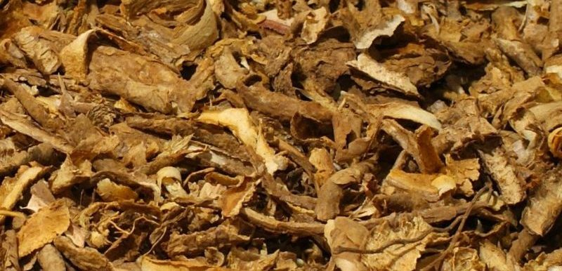 Iboga root bark, source of the alkaloid ibogaine.