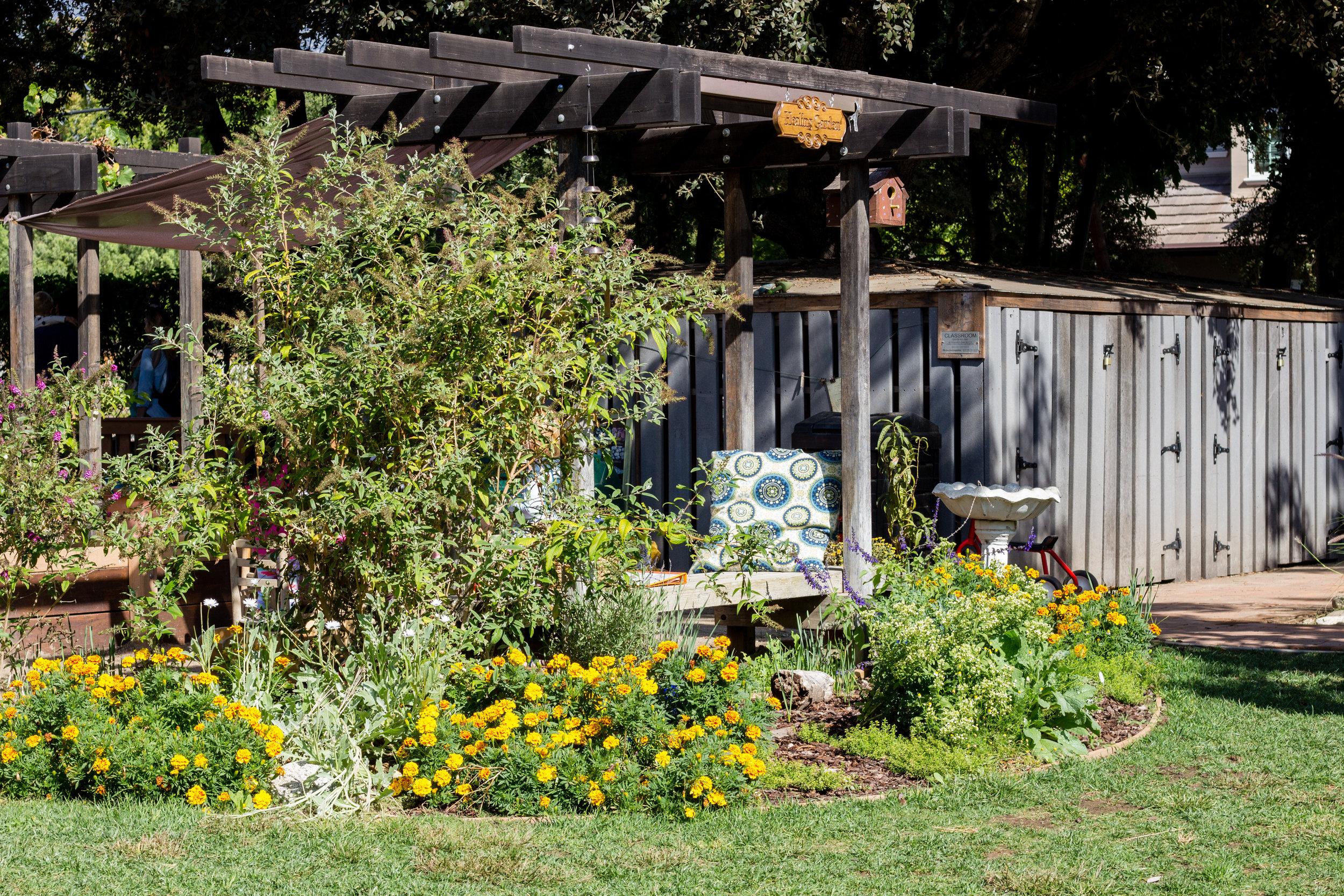 The Healing Garden, now in full bloom.