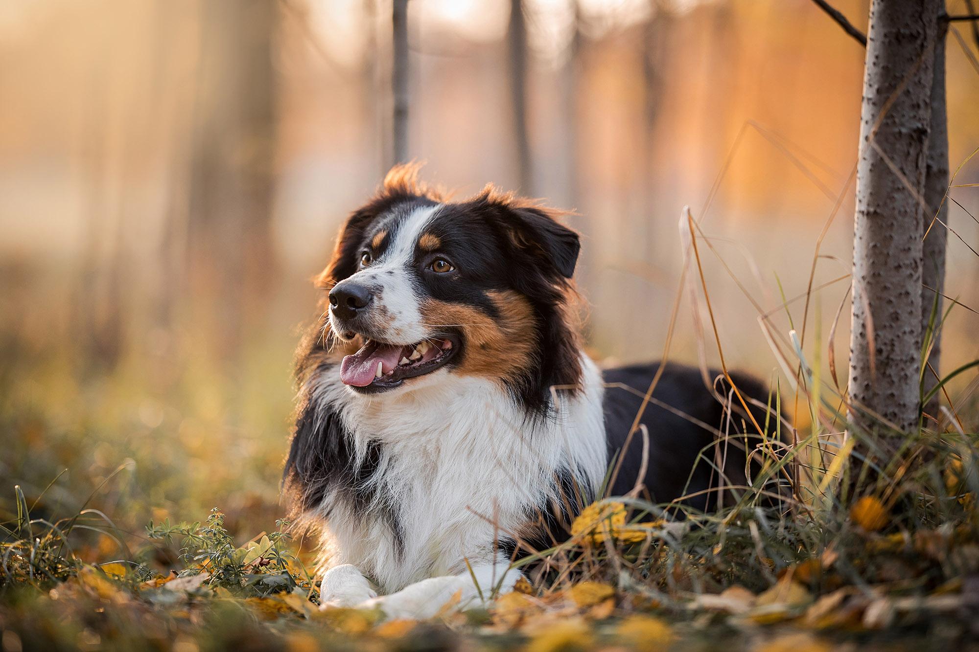 DJURFOTOGRAFERING  För små djur som katt eller liten hund finns min studio att tillgå, annars sker fotograferingen utomhus oavsett årstid.