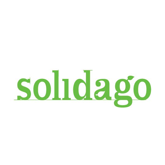 Solidago Chesapeake Bay Landscape Design