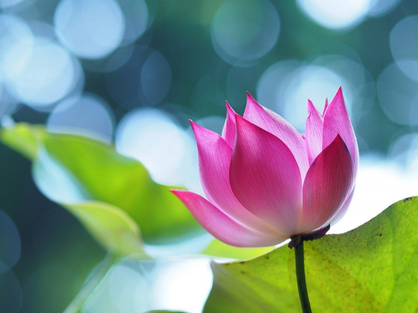 We All have Buddha Nature - Once we attain Buddha-hood, we all have the ability to create a Pure-Land.