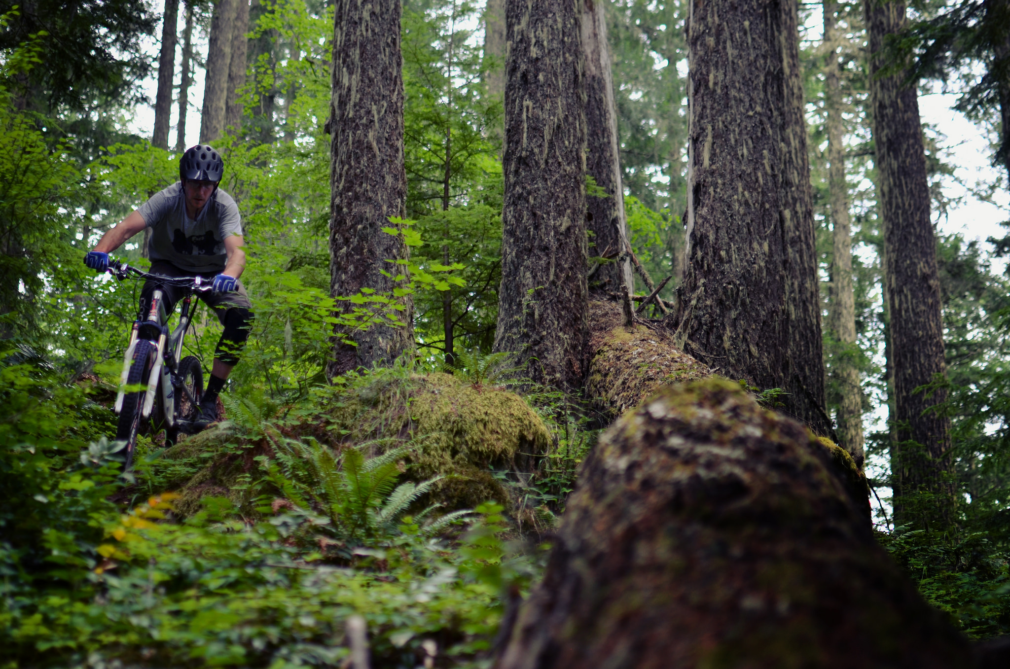 The Willamette Tier's lush fern forests