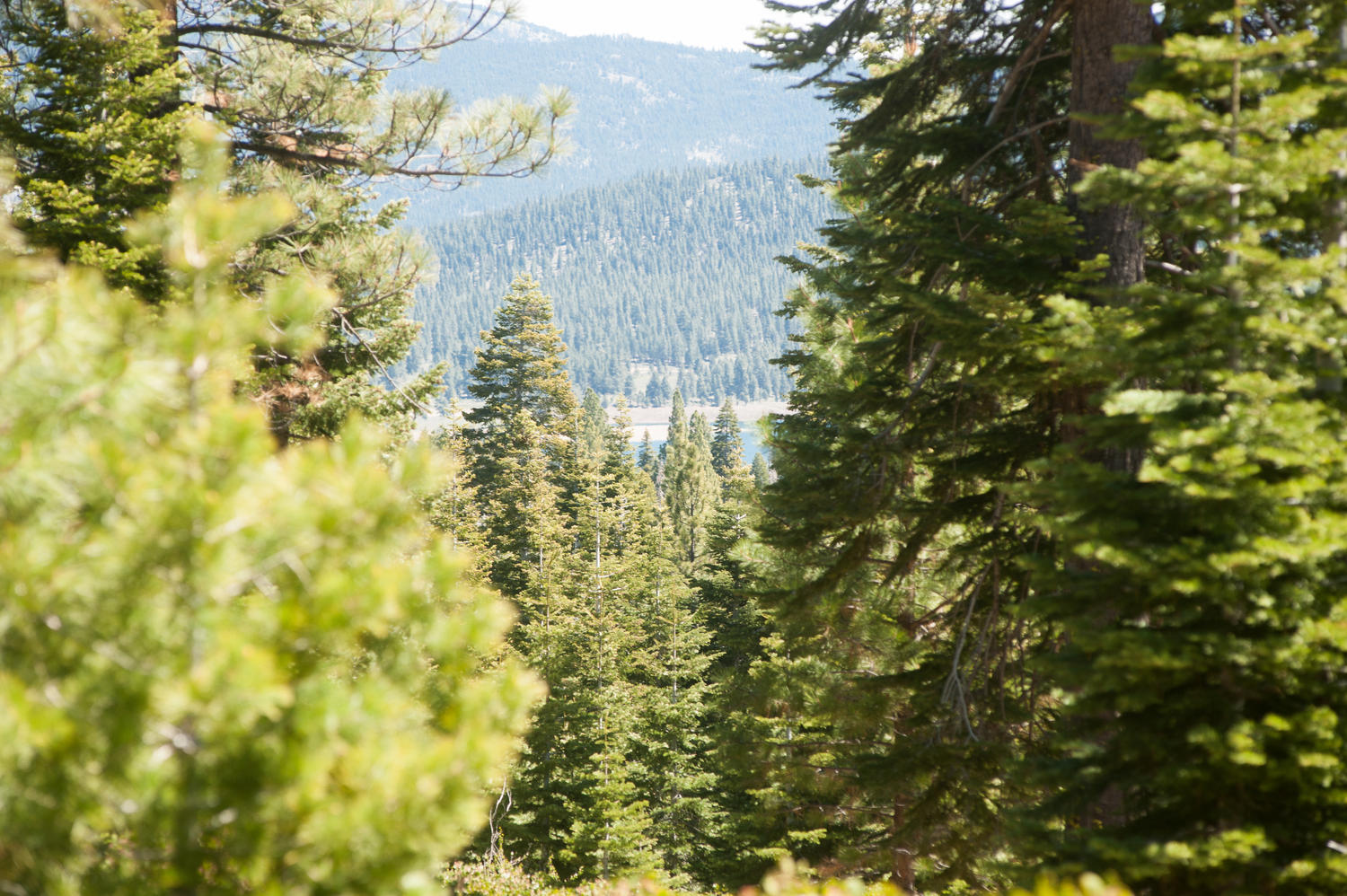 Alder Hill Lot Truckee CA-large-010-Alder Hill Lot-1500x999-72dpi.jpg