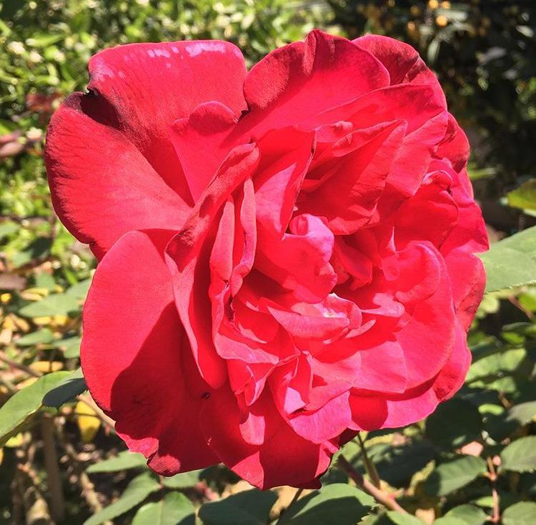 rose_garden.PNG