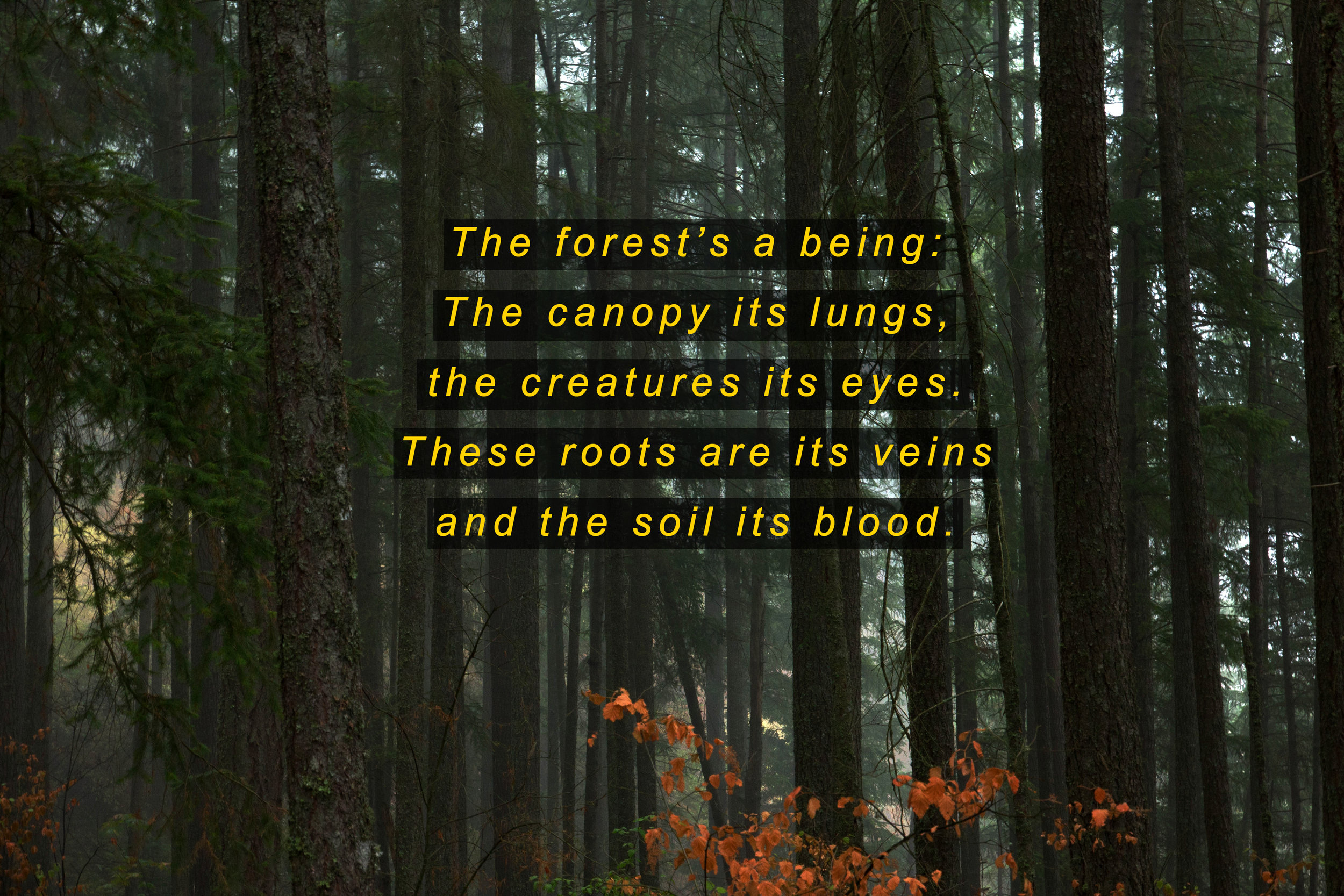 Forests a being.jpg