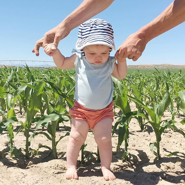 FARMER JOKE ALERT : Waist high by the 4th of July. 🤦🏼♀️ . . . . . #parentingblogger #childhoodunplugged #tractors #tractorsupply #johndeeregreen #johndeeretractor #urbanfarm #letthembelittle #countryfarm #momswithcameras #backyardfarm #motherhoodrising #uniteinmotherhood #candidchildhood #boise #boiseidaho #idahome #idahofarm #mamaswithstyle #letthembekids #farmkids #farmliving #farmfamily  #farmyard #farmwife #farmgirls #farmgals3 #myfarm