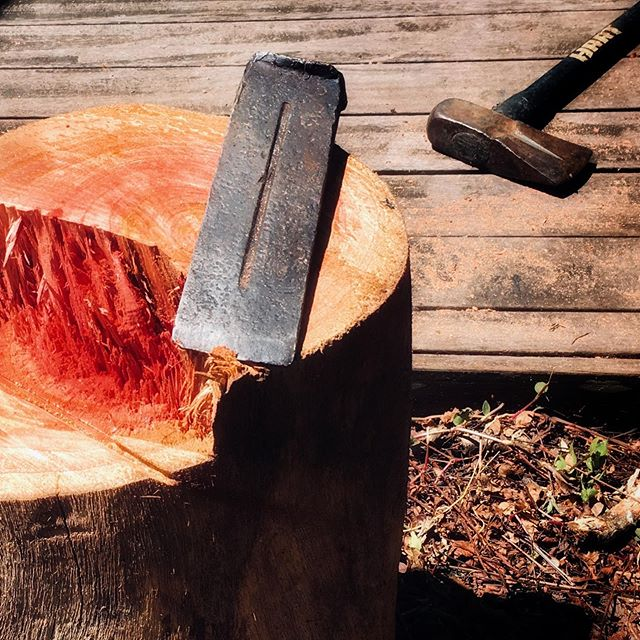 Freshly felled Australian red cedar tree from the property. Beautiful red centre.#australianredcedar