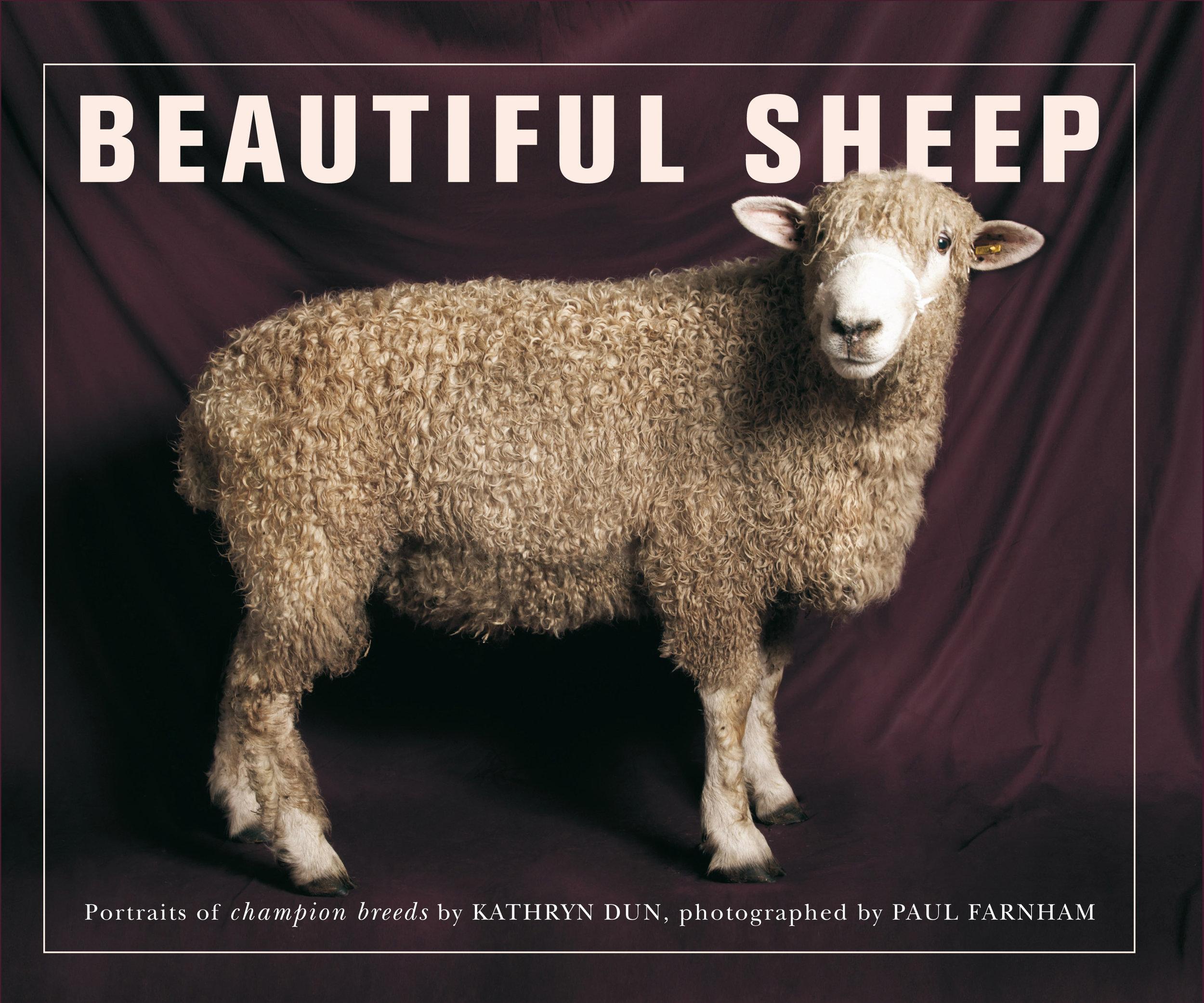 beautiful sheep.jpg