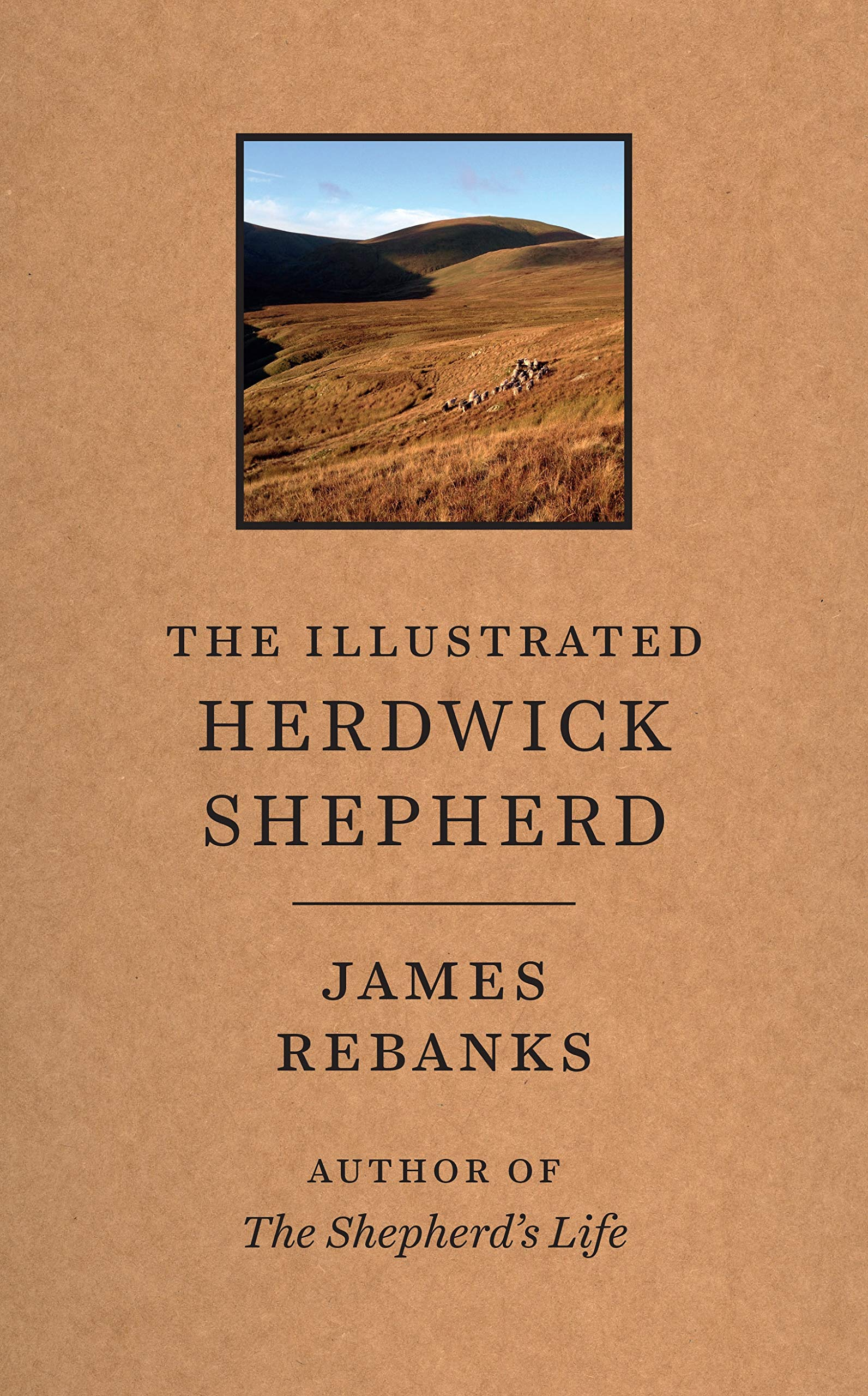 illustrated herdwick shepherd.jpg