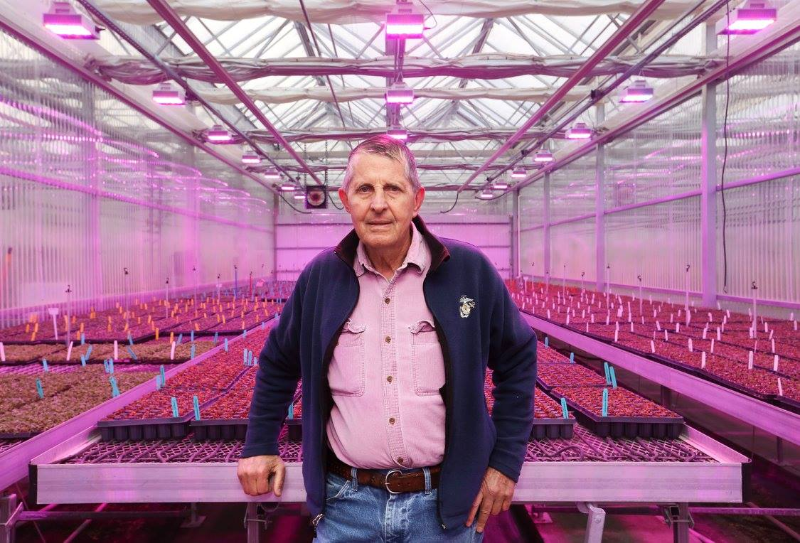 WHATELY, MASS. -- Nourse Farms owner Tim Nourse stands in front of fledgling berry plants bathed in violet light in one of his many greenhouses. The Nourse family has owned and operated their berry farm on River Road since 1968. For the past three and a half decades the farm has been producing dormant, bare-root berry plants through a plant propagation method known as tissue culture. (Recorder/Micky Bedell)
