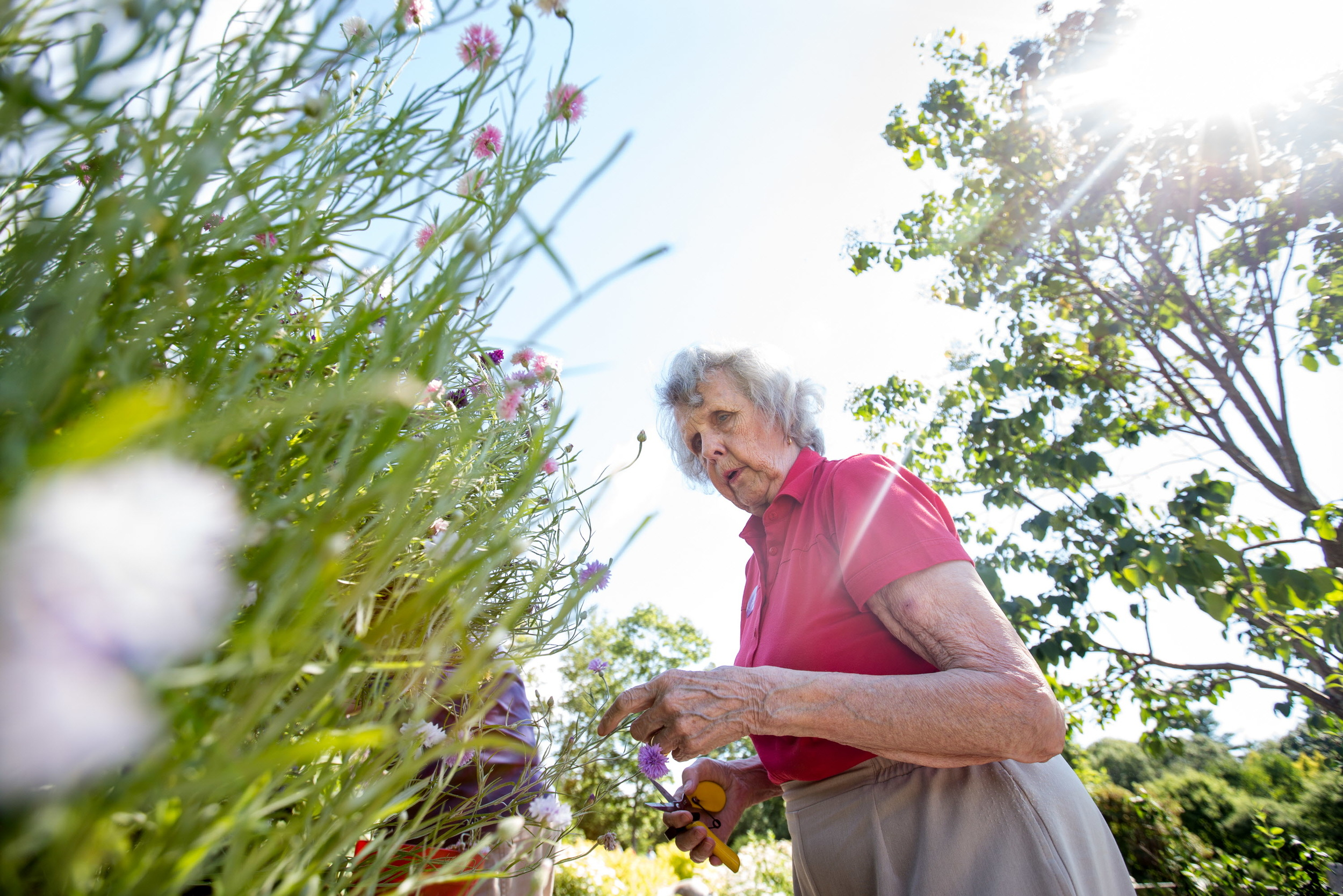 BOOTHBAY HARBOR, MAINE -- 08/03/2016 --Mollie Moore, 82, of Southport Island feels for dead flowers on a plant at the Coastal Maine Botanical Gardens in Boothbay Harbor during a VIP session of the Therapeutic Horticulture program for people with visual impairments. Moore is fully blind, having lost both eyes to meningitis many years ago, and is learning to garden through touch. (Micky Bedell   BDN)