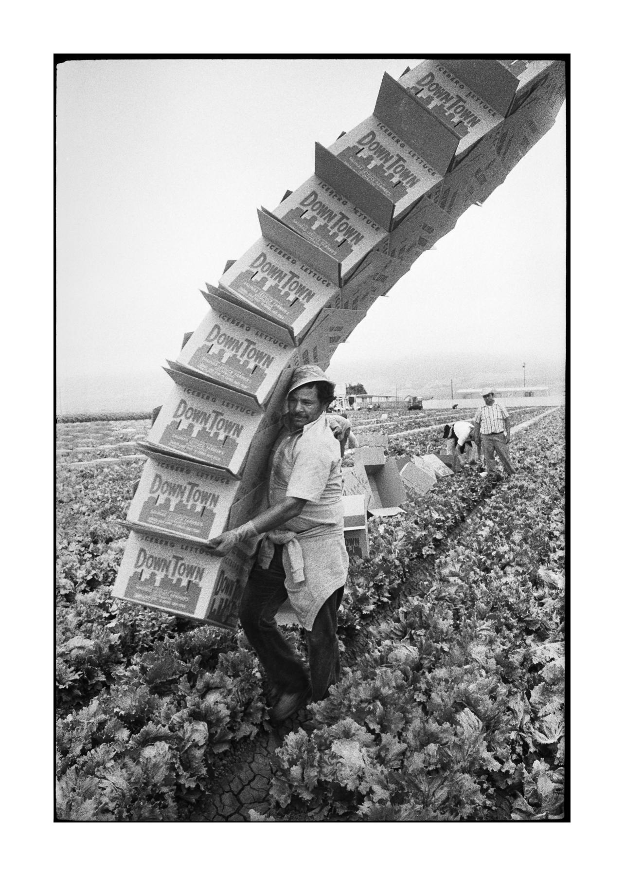farmworkers-2.jpg