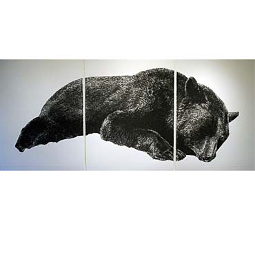 "Wesley Berg Fallen Bear, 2011, 50"" x 114"", charcoal on paper"