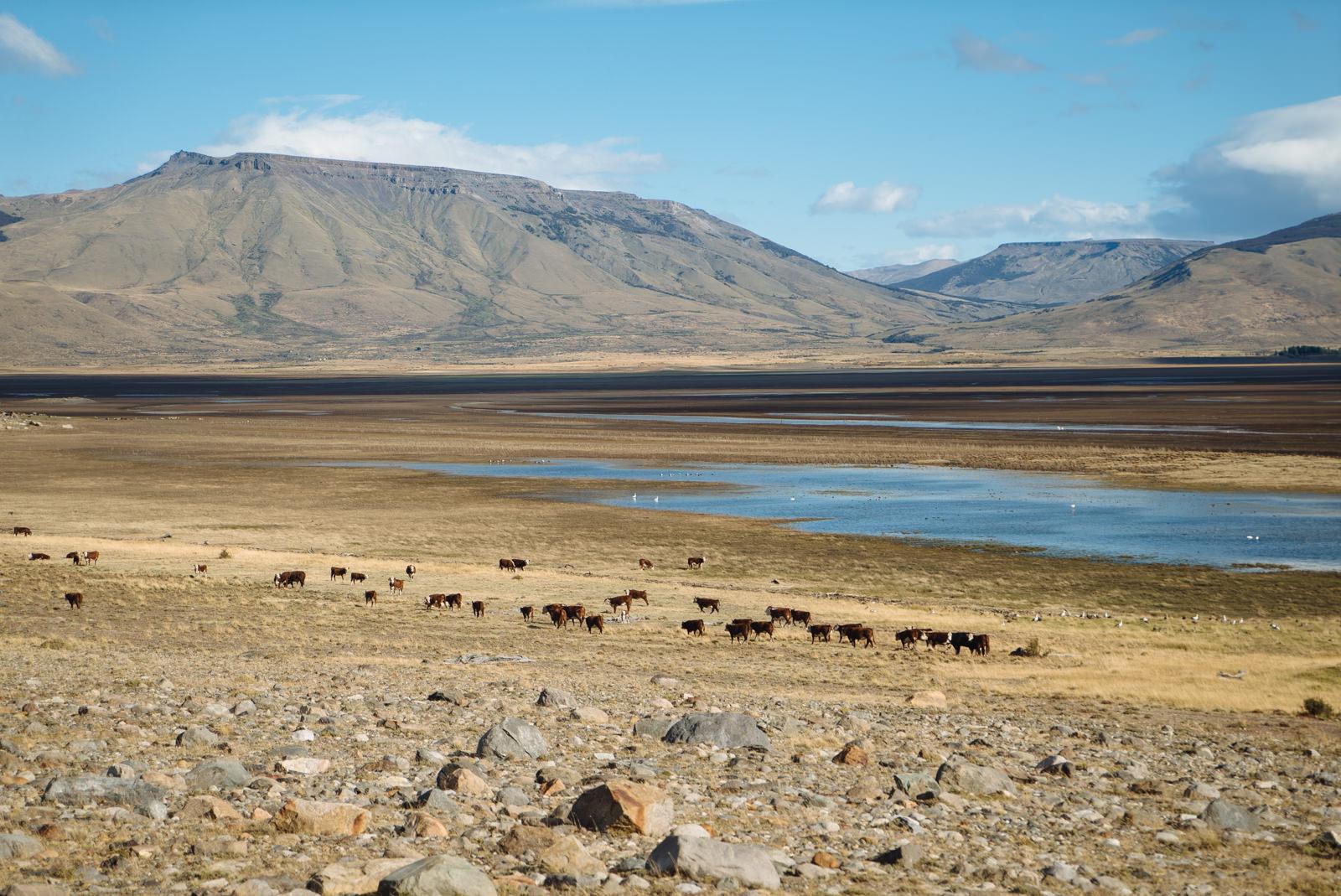 wrenee-el-calafate-patagonia-argentina-5.jpg