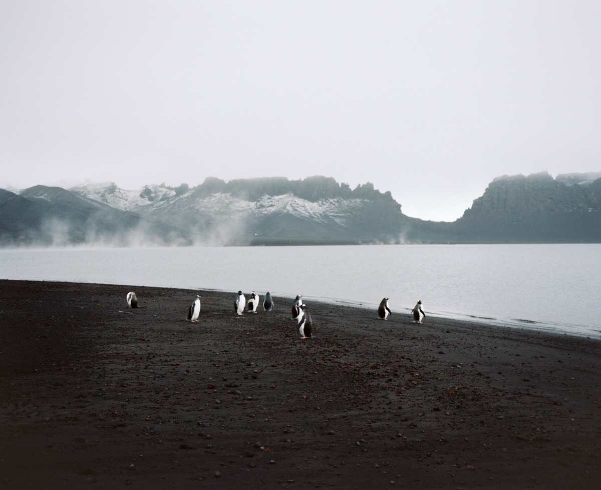 deception-island-mamiya-7-ii-wrenee-6.jpg
