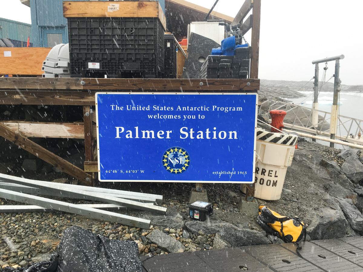 wrenee-antarctica-USAP-palmer-station-4.jpg