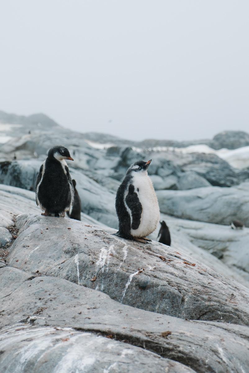 wrenee-antarctica-petermann-island-9.jpg