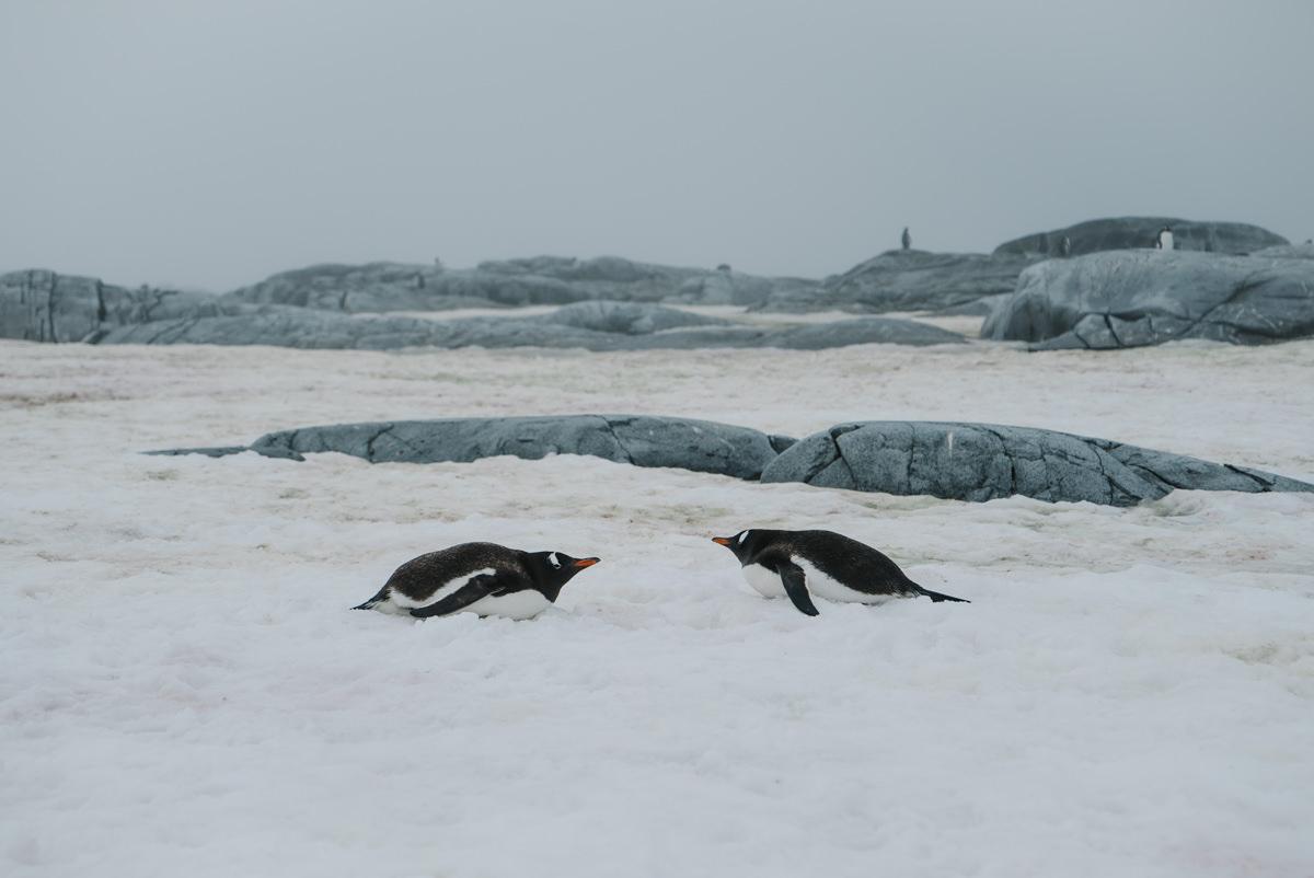 wrenee-antarctica-petermann-island-21.jpg