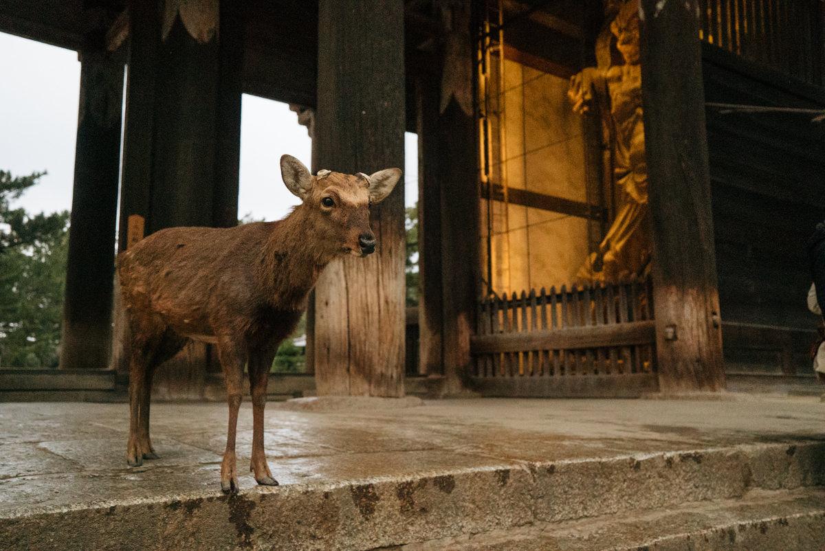 wrenee-nara-deer-park-japan-18.jpg