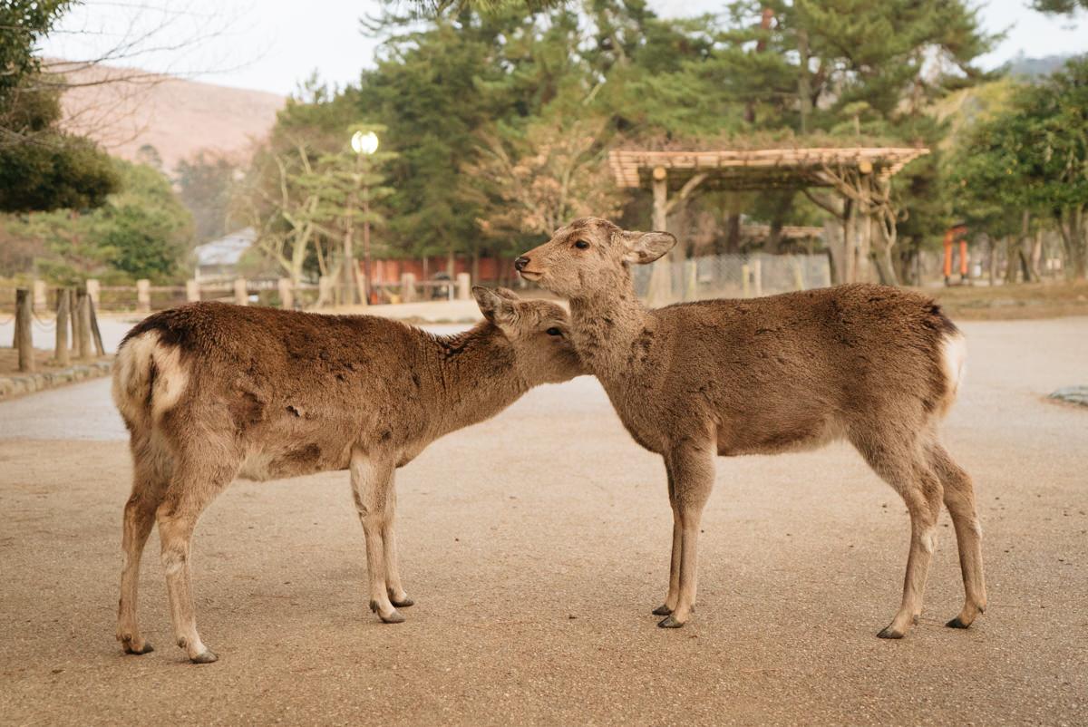 wrenee-nara-deer-park-japan-20.jpg