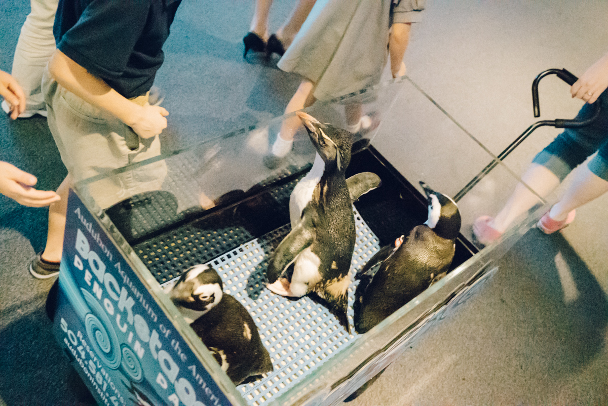 wrenee-audubon-backstage-penguin-pass-10.jpg